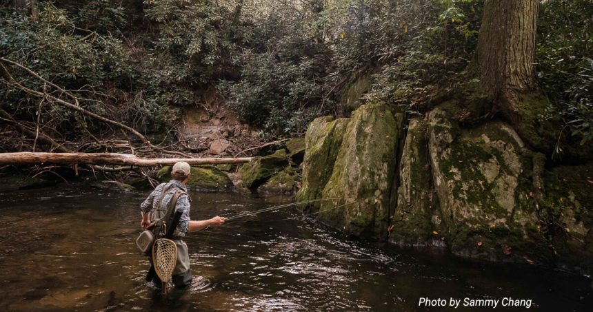 What happened to Laurel Run? The story of a stocked trout
