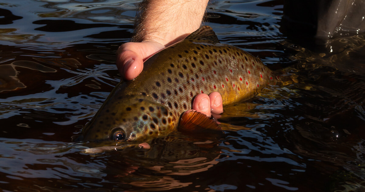 Fly Fishing Tips: The Order of Everything   Troutbitten